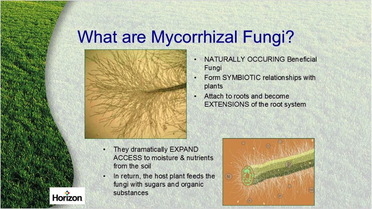 Benefits Of Mycorrhizal Fungi