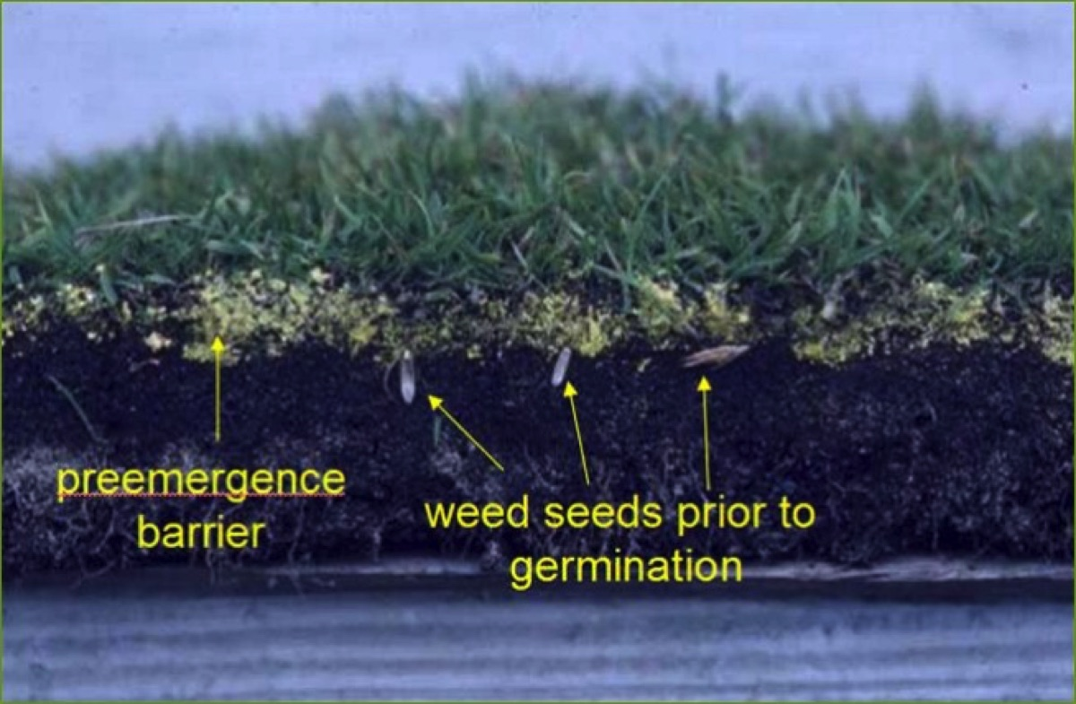 When To Ly Pre Emergent Herbicide For Optimal Results