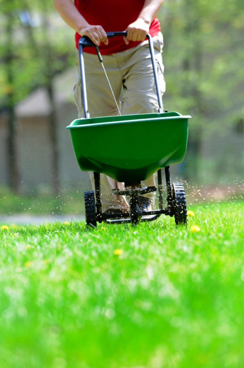 When And How To Overseed A Lawn