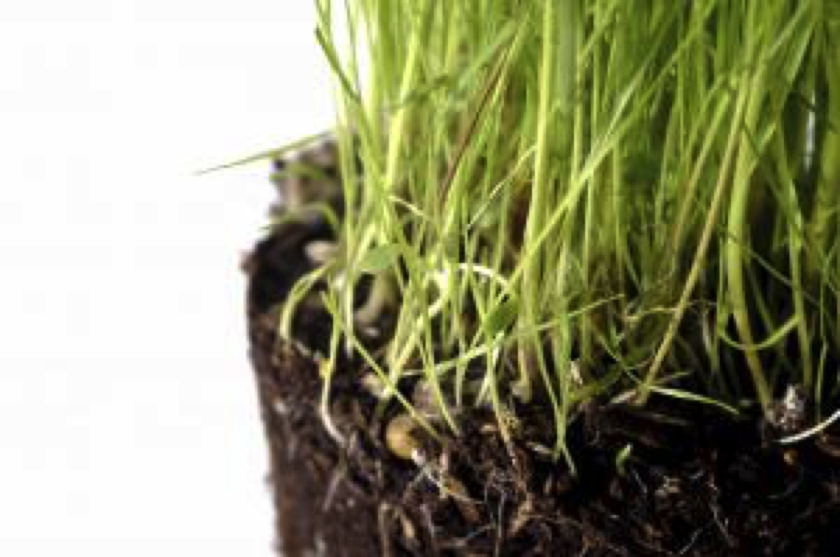 8 Types Of Nitrogen Used In Slow Release Fertilizer